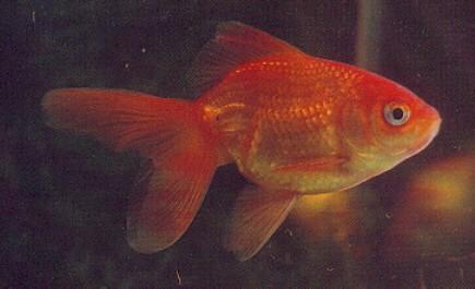 Kultakala Akvaario